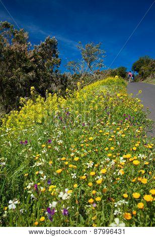 Roadside Flowers On La Gomera