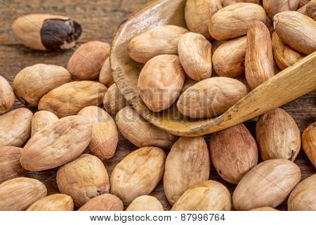 raw organic cacao beans on a rustic wooden scoop