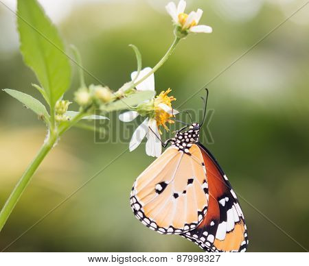the beautiful butterfly on green leaves