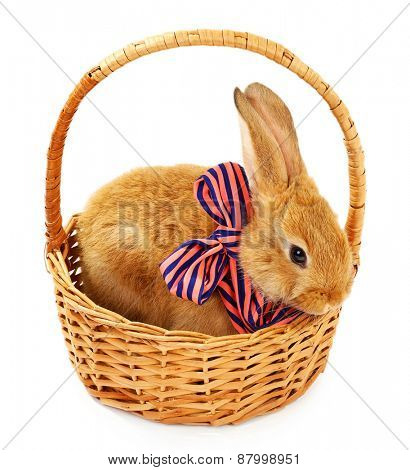 Cute brown rabbit with scarf in wicker basket isolated on white