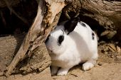 picture of rabbit hole  - A cute rabbit coming out of hiding - JPG