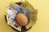 picture of fifties  - A hens egg in a nest of Australian fifty dollar notes - JPG