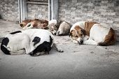 image of homeless  - Group of homeless dogs sleeping on the street of big city - JPG