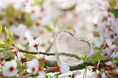 foto of glass heart  - glass clear heart in Spring with blossom cherry flower sakura - JPG