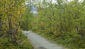 image of bike path  - Traveling on foot or bike in the Nordic County - JPG