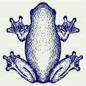 pic of pet frog  - Frog sketch - JPG