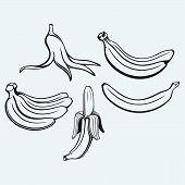 pic of bunch bananas  - Bunch of bananas - JPG