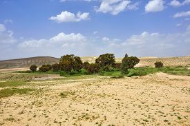 pic of oasis  - Small oasis in the Negev desert Israel - JPG