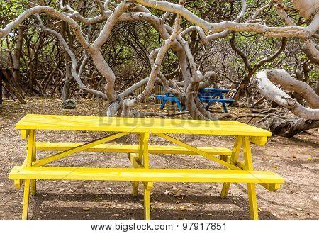 Yellow Picnic Table Under Manchineel Tree
