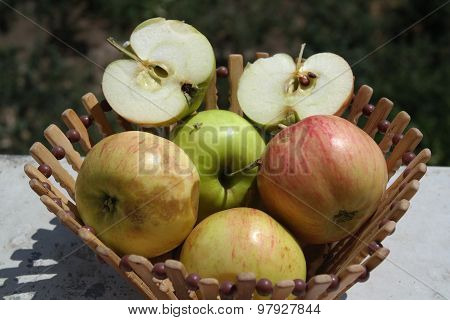 Apples in a Basket outdoor. Orchard. Autumn Garden. Harvest season concept. Harvesting. Picking red