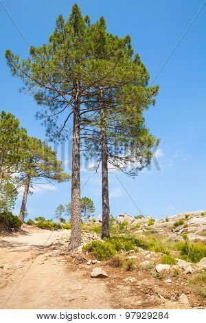 Mountain Landscape With Pine Trees On Rock