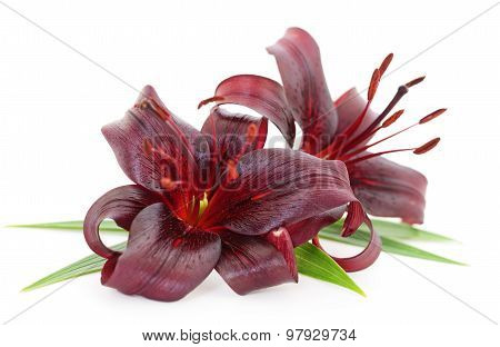 Red Lilies.