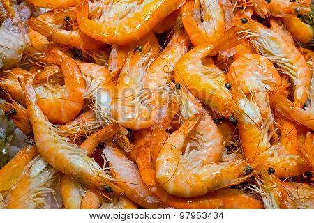 Fresh red shrimps for sale
