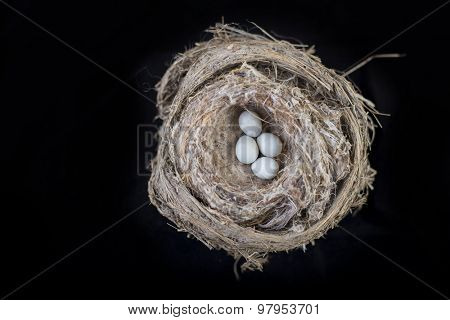 4 small bird eggs on a nest isolated over black