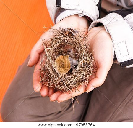 Old Nest Without  Eggs