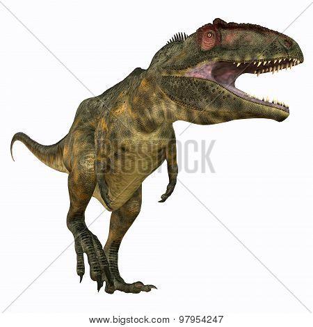Giganotosaurus Carnivore