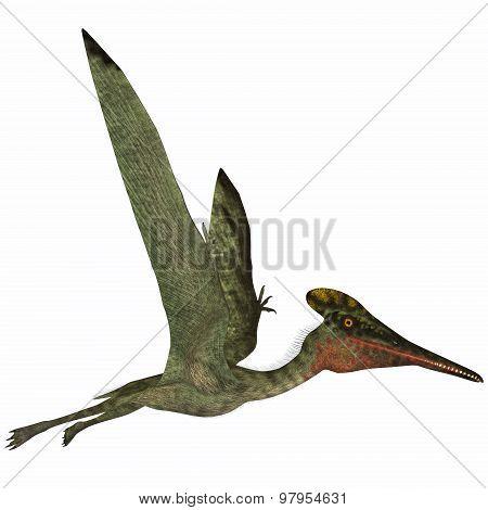 Pterodactylus Side Profile