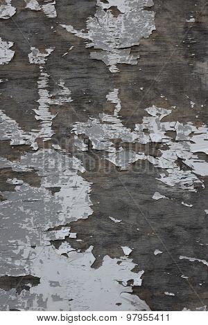 Tree Peel Background