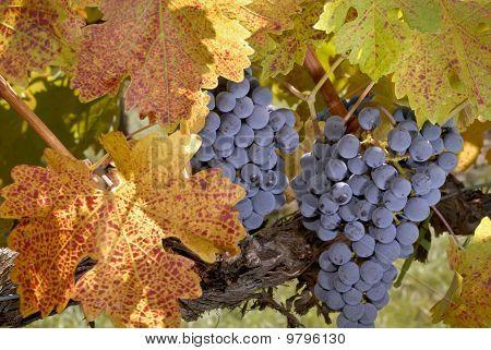 Tiempo de la cosecha de otoño