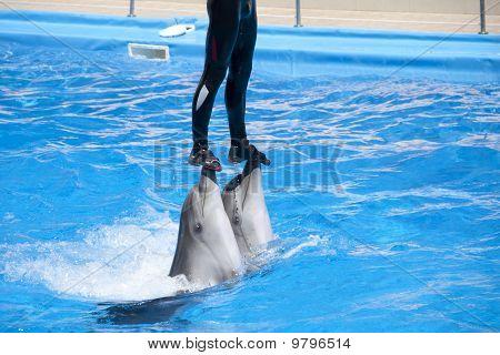 Dolphinarium Show