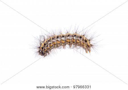 Colored Caterpillar On A White Background