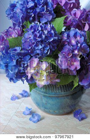 Blue, purple hydrangeas in pottery vase