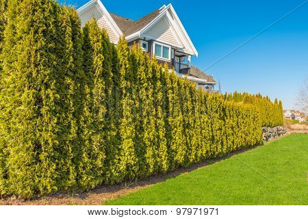 Cedar tree fence with green lawn and houses.