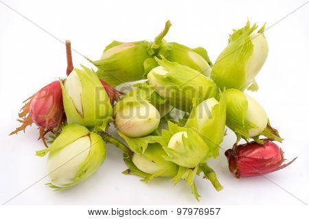 Green And Red Hazelnuts Isolated On White Background