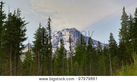 Mountain and Forest Trees