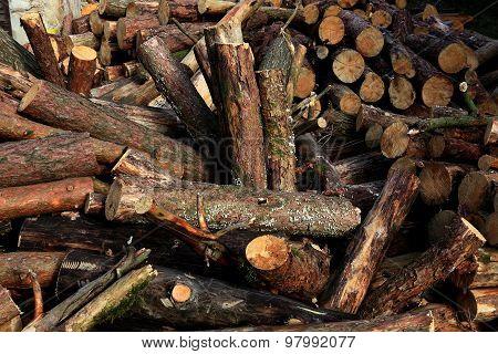 Dry firewood