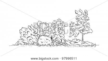 vector - bushes and trees isolated on background