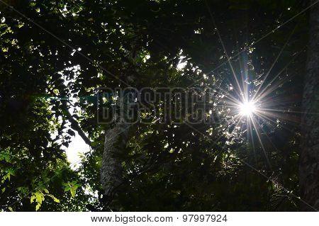 sunlight through the leaf