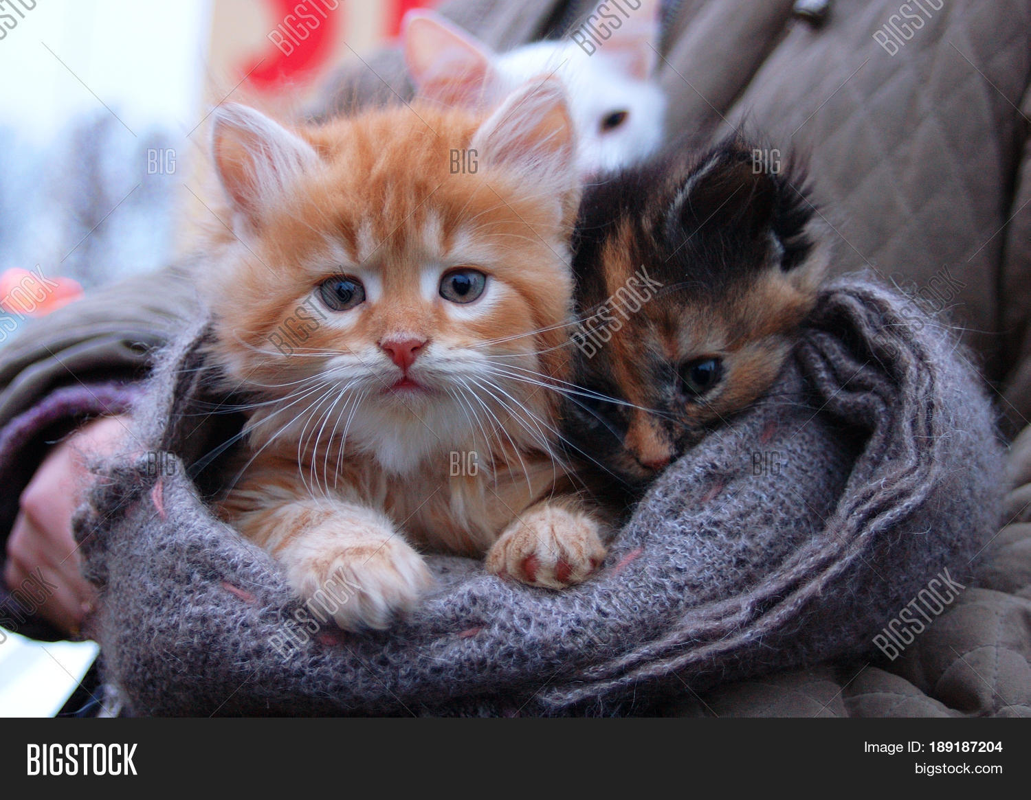Kitten Sale Hand made Scarf Outdoor Image &