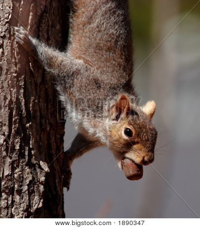 Cute Squirrel With Happy Catch
