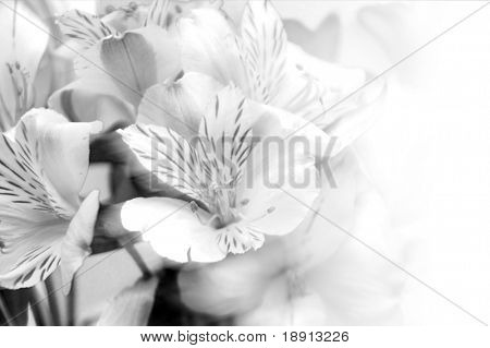 beautiful flowers over white with space