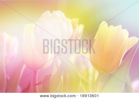 beautiful tulips made with color filters