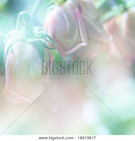 Rosen mit Farbfilter