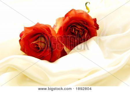 Two Hybrid Roses