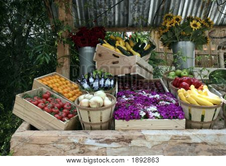 Soporte vegetal 1