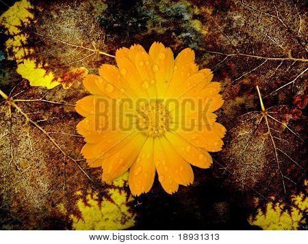 new life, flower on dead leaves