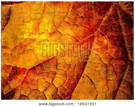 Grunge autumn leaf background