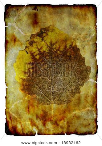 Old autumn leaf on the burnt paper