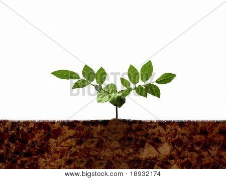 Green young plant shoot & soil, isolated