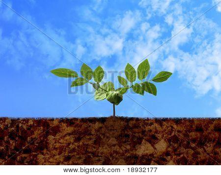 Broto verde, solo & nublado céu azul