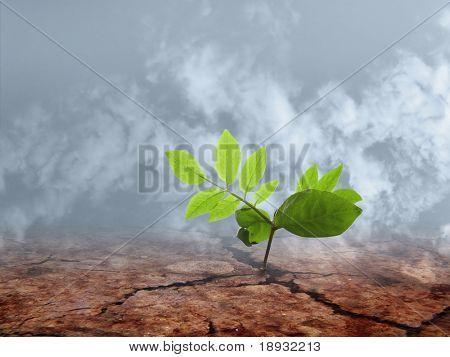 ecocatastrophe: Braird on the cracky soil, toxic smoke