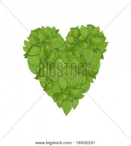 isolated green plant heart