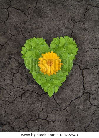 Green plant heart on cracked soil
