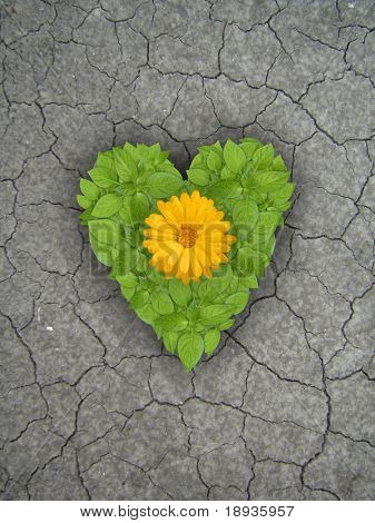 Green plant heart with flower on cracked soil