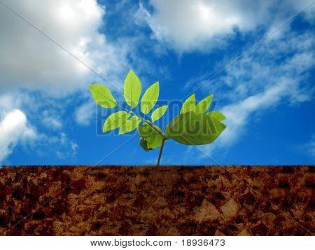 Green seedlings illustrating, new life