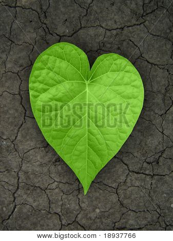 heart shaped leaf on cracked soil